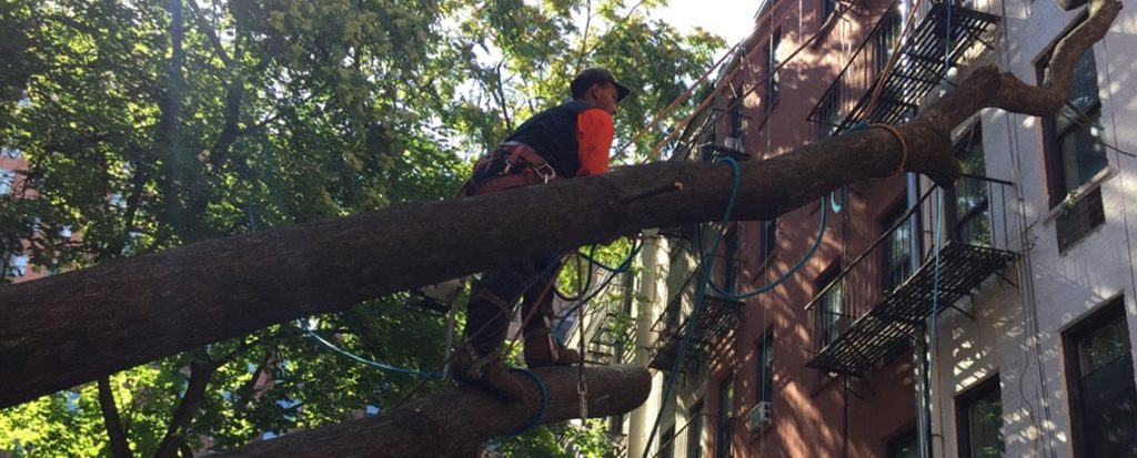 Manhattan Tree Cutting