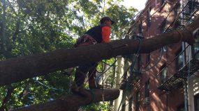 Manhattan Tree Cutting
