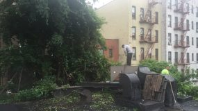 tree care tips, Manhattan tree care, Bronx tree care, Manhattan tree company